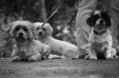 Betty, Cloud and Itsy out for a walk in Toronto